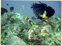 bohol-corals.jpg